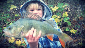 Jack lewis Perch - Get into Fishing